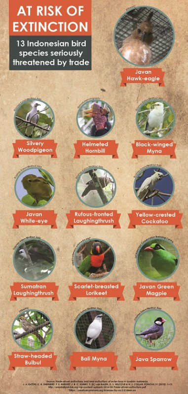 3 bird species found in Sundaic Indonesia are at serious risk of extinction because of trade. Image courtesy of TRAFFIC