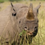 UNODC Releases Unprecedented Wildlife Crime Report