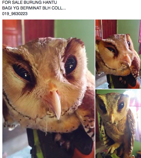 Wildlife for sale on Facebook.