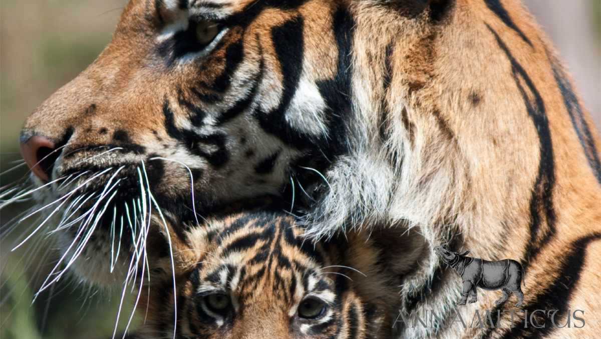 A coalition of 45 NGOs call upon China, Laos, Thailand and Vietnam to end tiger farming and trade.